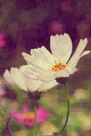 flower close up: close up of white Cosmos flower in vintage panting style