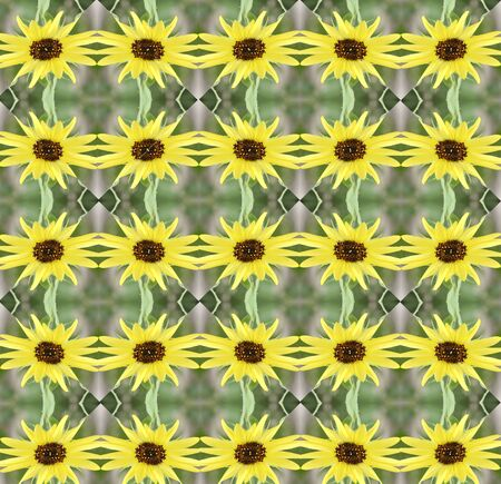 parallelogram: background pattern made from piece of sunflower in vintage style ,created from filter technique Stock Photo