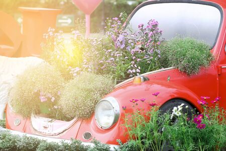 rusty car: sweet dreamy , Old car and fields of flowers with light flare Stock Photo