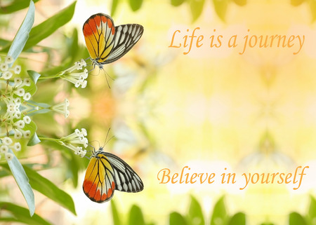 Life is a journey , Believe in yourself - motivational quote, sweet dreamy of twin beautiful butterfly absorb some sweet from  flowers in sunny day