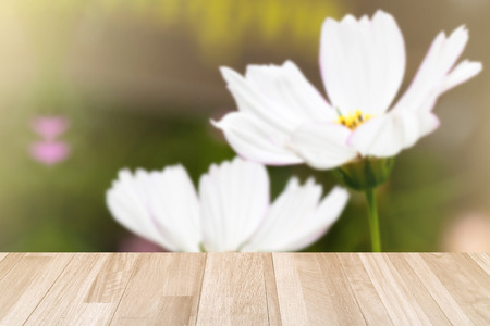 background of ivory panel texture in white Cosmos garden