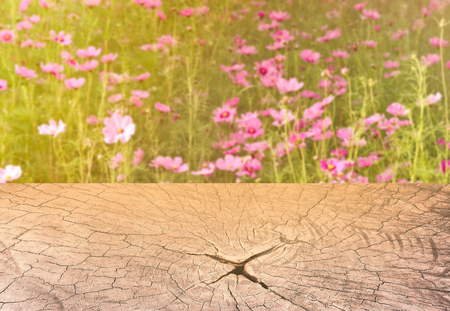 sweet dreamy and de-focused , pink Cosmos meadow with sun flare in sunny day and texture section trunk of tree