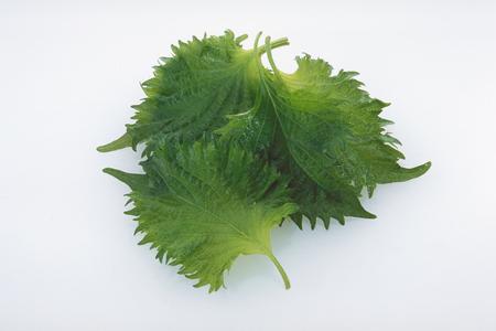 Shiso leaf isolated on white background Stock Photo
