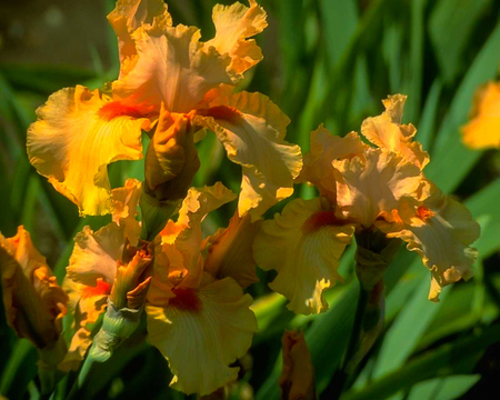 Beautiful orchid flower and green leaves background. Orchids close up