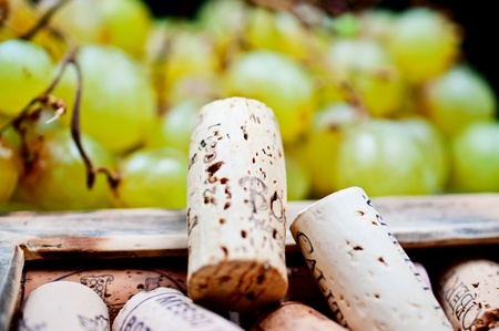 corked: Wine corks in the frame close up