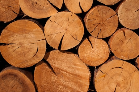 sawed: Sawed trees for firewood close up