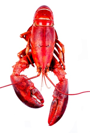 Lobster on white background isolated Stock Photo - 13683236