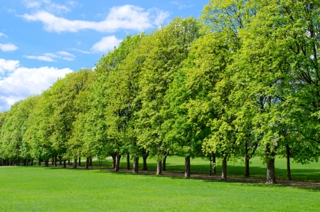 Tree line in the popular Vigeland park in Oslo, Norway photo