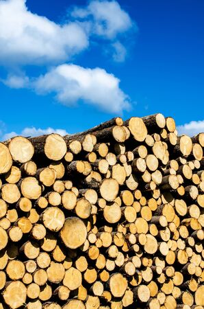 Pile of pine on blue sky background Stock Photo - 13957931