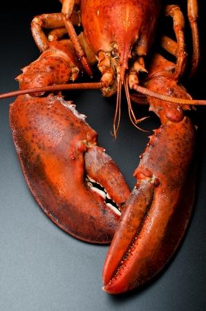 Prepared lobster on black background