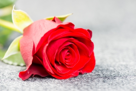 textil: Red rose on a grey cloth Stock Photo