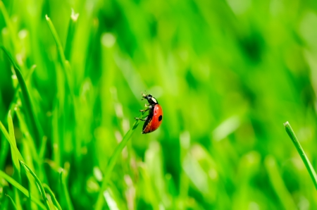 Ladybird on grass photo