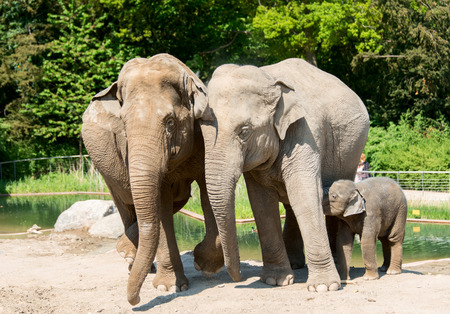 Elephant family in zoo photo