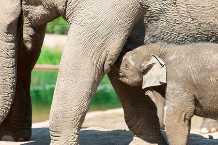 Baby elephant in zoo photo