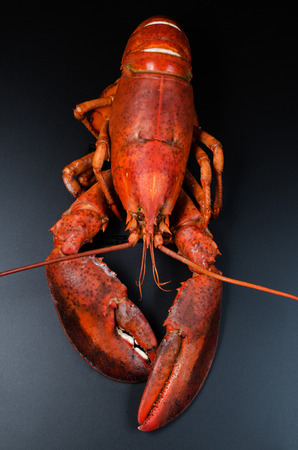 Cooked lobster on dark background photo
