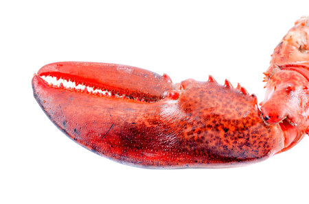 lobster dinner: Lobster claw on white background Stock Photo
