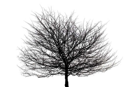 black tree silhouette on white in isolation Stock Photo - 867910