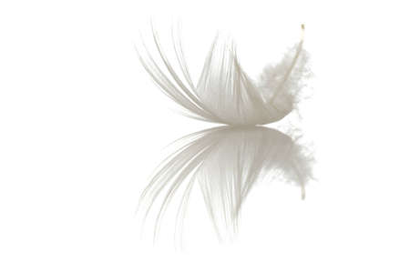flying float: single feather on white