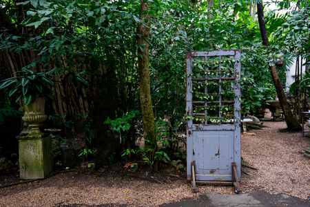 The vintage wood door with Vine and ivy in the forest. Stock Photo