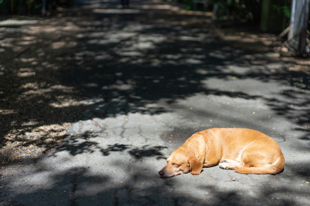 A dachshund dog is sleeping on the road in the park.