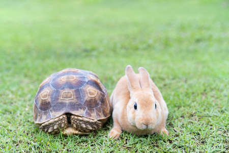 Rabbit and turtle are discussing the competition. : the rabbit and turtle tales.