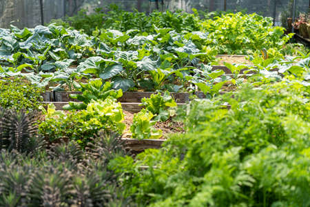 Organic vegetables grown on a hydroponic farm. Stock Photo