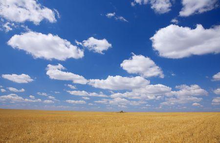 late summer: Late summer field under blue sky