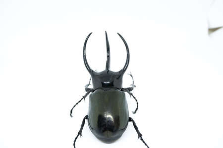 Stag beetle isolated on white background. Stock Photo