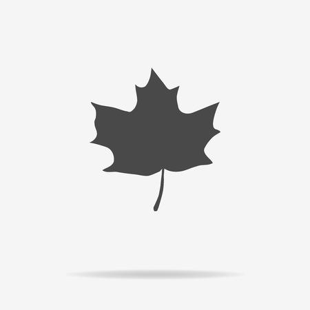 maple leaf icon: Maple leaf icon. Vector concept illustration for design.