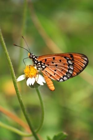butterfly feeding on flower photo