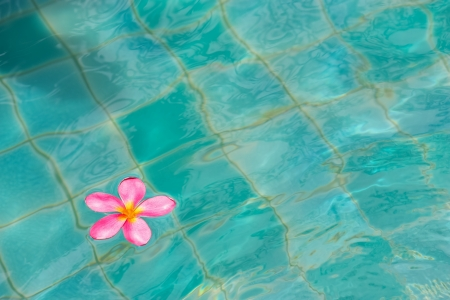 Floating frangipani  photo