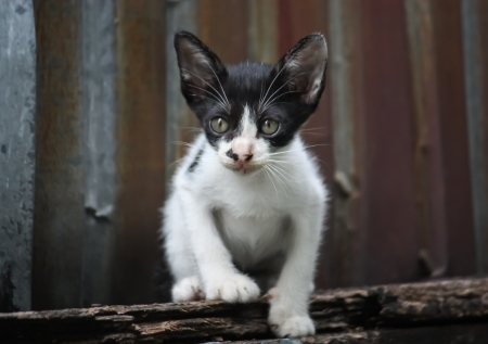 Young poor cat  photo