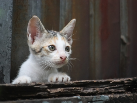 Young poor cat Stock Photo - 21530275