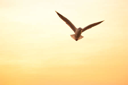 silhouette seagull photo