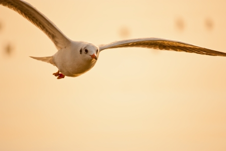 seagull  silhouette photo