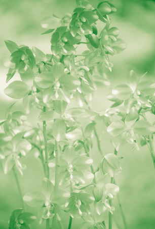 green tone: Orchids flower with green tone Stock Photo