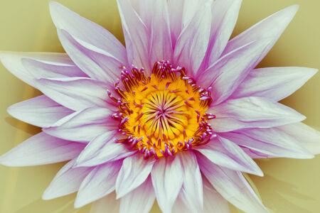 Vintage style of lotus flower  photo