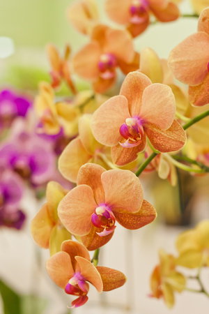 Orchid flower in farm photo