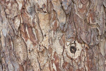 mahogany: Surface of mahogany background
