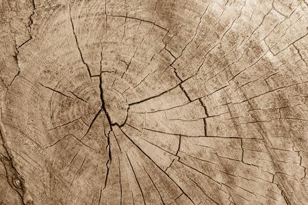 木材の背景の表面 写真素材