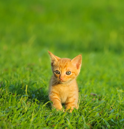 Little cute kitten playing on the grass Stock Photo