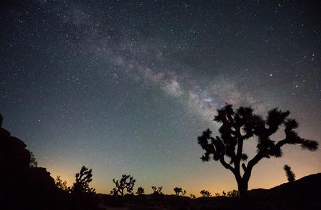 joshua tree national park: Milky Way in Joshua Tree National Park
