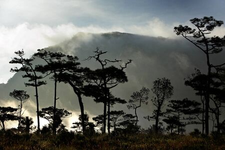 soi: Mist in Pine forest at morning, Phu Soi Dao National Park, Uttaradit, Thailand.