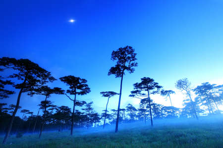 soi: Mist in Pine forest with twilight at dawn, Phu Soi Dao National Park, Uttaradit, Thailand.
