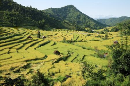 thai culture: Terraced Paddy field in countryside, Chiang Mai, Thailand. Stock Photo
