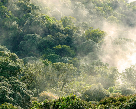Aerial view of rainforest with mist and sunlight  in the morning, Chiang Mai, Thailand.