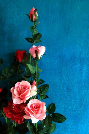 deep blue: Pink and Red roses on blue wall Stock Photo