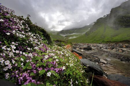 rill: Wild flower near rill (small river) in mountain valley at Northern India Stock Photo
