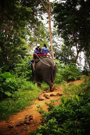 phuket: Elephant Ride in Phuket, Thailand