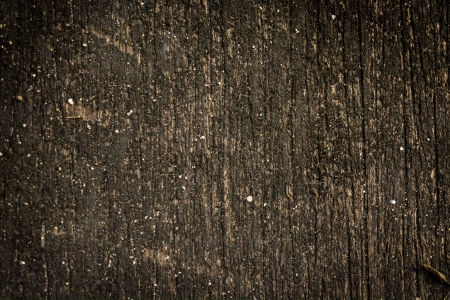 detail: tree trunk background